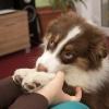 Как вычесывать собаку весной