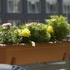 Какие цветы лучше сажать на балконе
