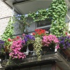 Как устроить на балконе цветник