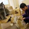 Как открыть кафе для любителей кошек