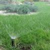 Как вырастить газон своими руками