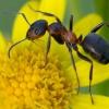 Как спастись от муравьев на даче