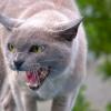 Как усмирить взбесившегося кота