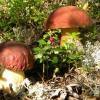 Несколько рецептов соленых грибов