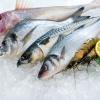 Польза и калорийность рыбы