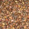 Как приготовить кедровое молоко из свежих семян