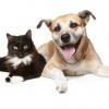 Что такое уремия у кошек и собак