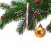 Как выбрать новогоднюю ель