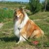 Как научить собаку командам – «Место», «Рядом», «Ко мне»