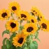 В чем польза семян подсолнечника