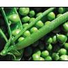 Как вырастить хороший урожай зеленого горошка