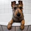 Как легко помыть собаку
