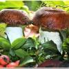 Как сделать грибочки для украшения сада