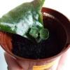 Как посадить фрагмент листа фиалки