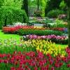 Достопримечательности Голландии: сады Кейкенхоф