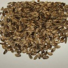 Расторопша: лечебные свойства семян и способ применения