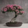 Миртовое дерево: как ухаживать