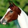 Как нарисовать лошадь акварелью