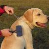 Что необходимо для ухода за собакой