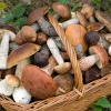 Отравление грибами: симптомы и первая помощь