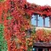 Вертикальные сады - какие подобрать растения