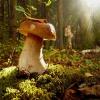 Как собирать лесные грибы