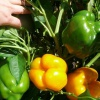 Как перейти на натуральное земледелие: личный опыт