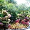 Садовые цветы. Сад непрерывного цветения