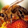 Укус пчелы, осы или шмеля: первая помощь