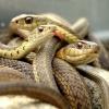 Толкование снов: к чему снятся змеи
