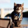 Нужно ли выгуливать кошку в городе