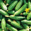 Рецепт быстрого приготовления малосольных огурцов в кастрюле