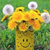 Штрихи к портрету одуванчика: малоизвестные факты об известном цветке