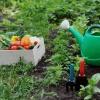 Как сделать огород для будущих посевов