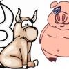 Совместимость гороскопов: Свинья-Телец