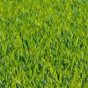 Почему трава весной зеленая