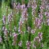 Как вылечить кашель с помощью целебных трав