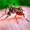 Лихорадка Зика: симптомы, лечение и профилактика