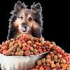 Корм для собак: виды и особенности