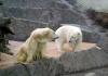 "Зоопарк в Праге ""ZOO PRAHA"", Прага (Чехия)"