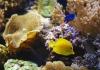 Океанариум Морской аквариум на Чистых прудах