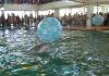 Алушта дельфинарий