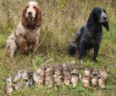 Select a hunting dog