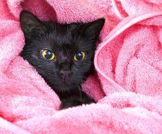 помыть кошку без травматизма