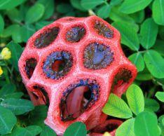 Самые необычные грибы, которые можно встретить в России