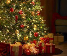 Как продлить жизнь новогодней елки в домашних условиях