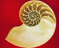 Последовательность Фибоначчи и принципы Золотого сечения