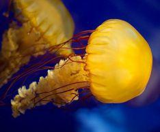 Удивительные факты о медузах