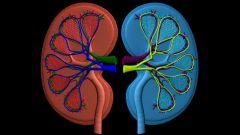 Как лечить пиэлонефрит