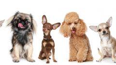 Как выбрать собаку